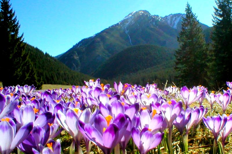 Wczesna wiosna Image 1